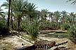 ALG70RC1_05 Date palm grove, irrigation channels & ditches, arid soil. In-Salah oasis, Tademaït Plateau; Sahara Desert, Algeria. Copyright Tropix (R. Cansdale)