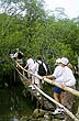 CRC97LS2_19 Eco-tourist group hiking over wooden footbridge, bamboo handrails, entering forest. Curu Wildlife Refuge, Costa Rica. Copyright Tropix (Lynn Seldon)