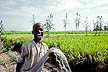 NIG85DD4_08 Delighted farm boy holding water pipe gushing from tubewell; irrigated rice field; Fadama land, Kano State, N.Nigeria. Copyright Tropix (D. Davis)