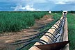 ZAM86TX6_06 Nakambala sugar estate syphon / furrow irrigation; channel temporarily blocked off; Zambia. Copyright Tropix (V. and M. Birley)